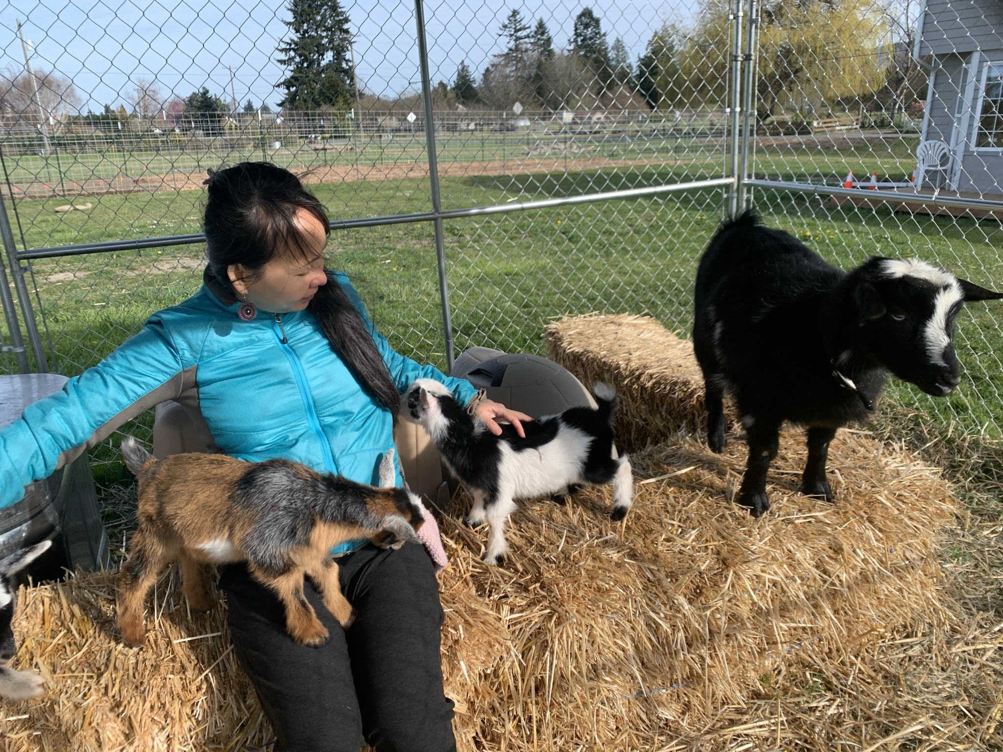 play-with-baby-goats.jpeg