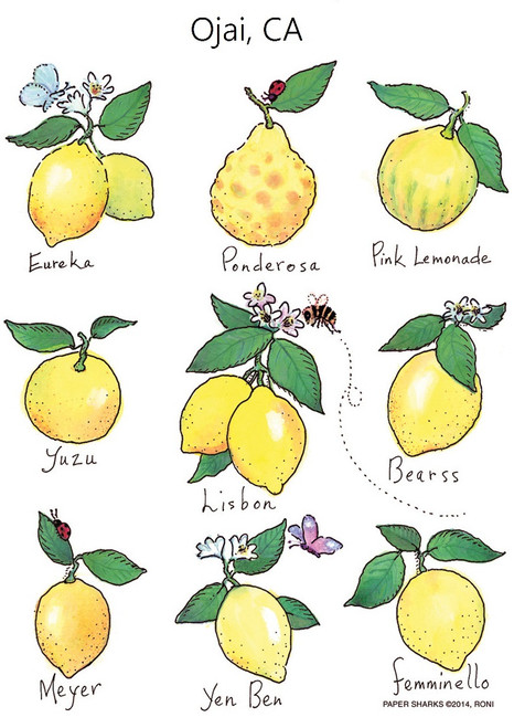 Lemons Flour Sack Towel