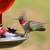 Perky-Pet Red antique hummingbird feeder