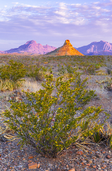 Big Bend Sunrise 2 by Tim Herschbach  | THP10148