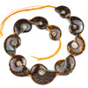 Ammonite Whole Fossil Graduated 25x30-40x48mm Through Drilled Beads - 16 inch strand