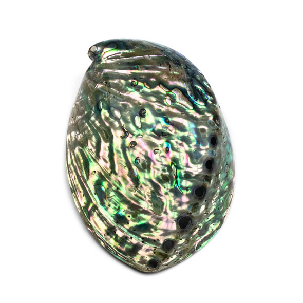 Abalone Paua Shell, approximately 3x4.5 inches - 1 per bag