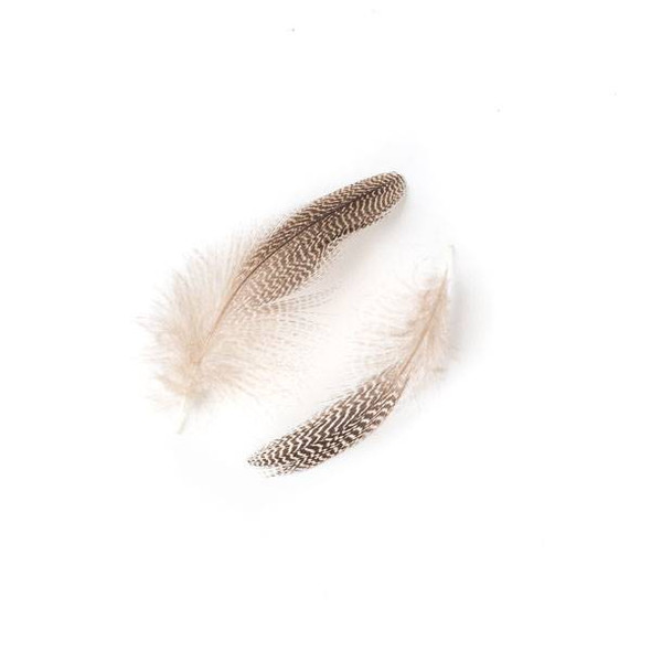 Brown and White Striped Feathers, 3 inches, 2 per bag - #2-2
