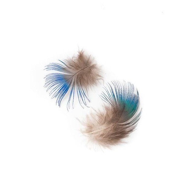 Peacock Tipped Brown Feathers, 2 inches, 2 per bag - #2-7