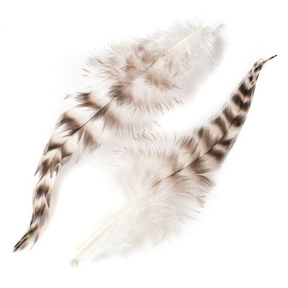 Brown and White Striped Feathers, 6 inches, 2 per bag - #3-5