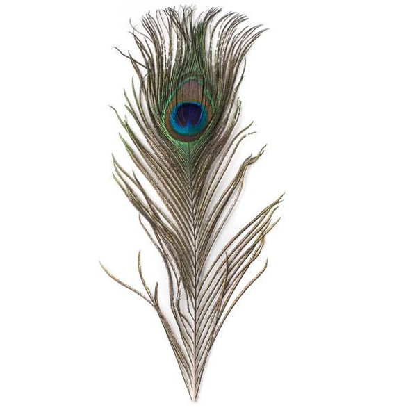 Peacock Feather, 11 inches, 1 per bag - #3-8