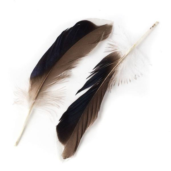 Brown and Black Feathers with White Tips, 5-6 inches, 2 per bag - #4-6