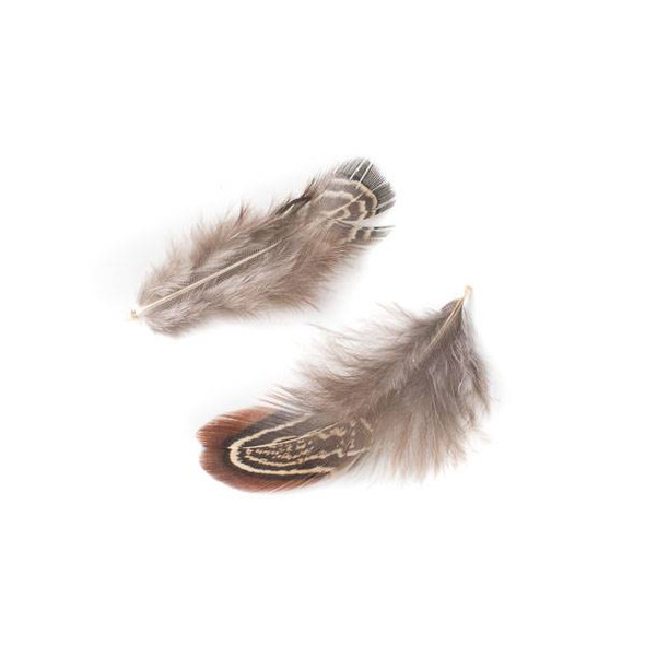 Brown and Tan Feathers, 2.5-3 inches, 2 per bag - #7-1