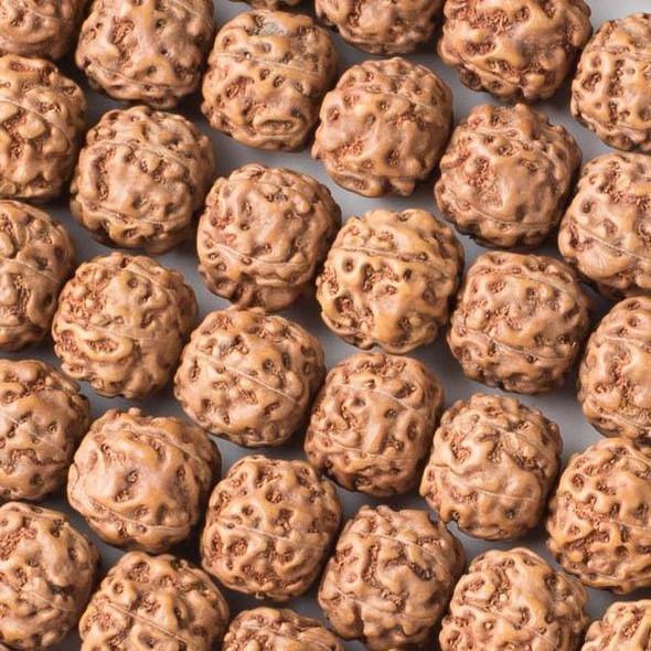 Rudraksha 14-15mm Brown Round Beads - 16 inch strand