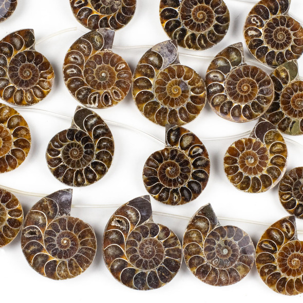 Ammonite Fossil 25x30-40x45mm Top Drilled Half Slice Beads - approx. 7 inch strand