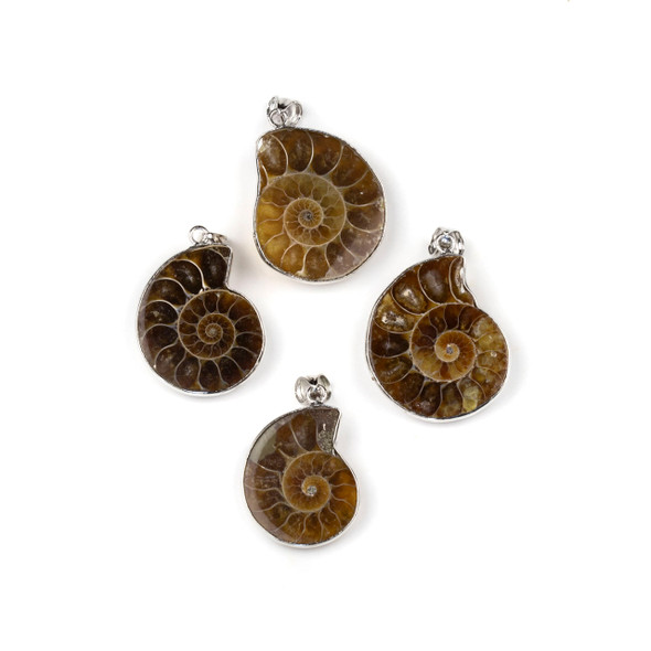 Ammonite 20-25x30-35mm Small Pendant with Silver Pewter Bail - 1 per bag
