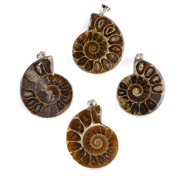 Ammonite 30-35x40-45mm Large Pendant with Silver Pewter Bail - 1 per bag
