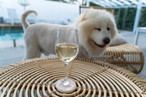 Wine Glass 315ml Set of 4