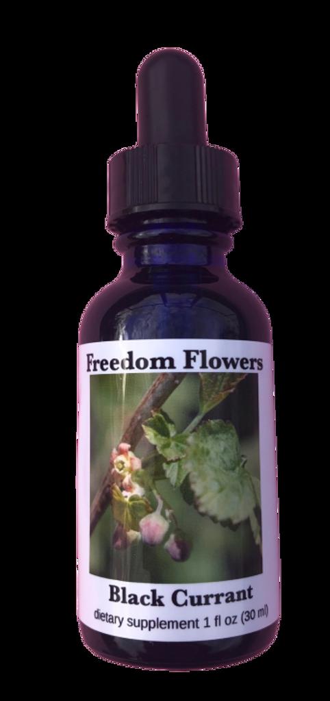 Black Currant Flower Essence