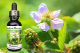 Blackberry flower essence bottle with blackberries blooming and fruiting in background
