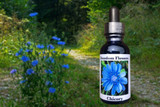 Chicory flowers with essence bottle
