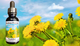 Dandelion flower essence bottle with dandelions in landscape