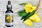 Evening primrose flowers with essence bottle
