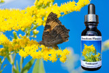 Goldenrod flower essence bottle with goldenrod flowers and butterfly