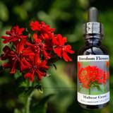 Red Maltese Cross bloom with flower essence bottle.