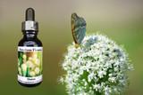 Onion flower, butterfly and flower essence bottle