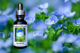 Speedwell flower essence bottle with flowers in the background