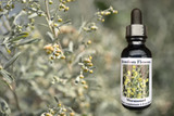 Wormwood flowers with flower essence bottle