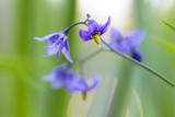 Bittersweet Flower Essence