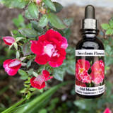 Old Master Rose flower essence bottle with cluster of roses to the left of it.