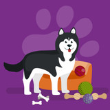Graphic from bottle label: Illustration of a Husky by its dog bed and toys