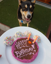 Pepper enjoying her Puppy Party Celebration