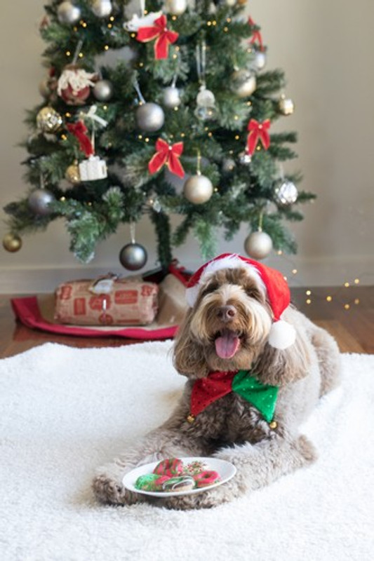 PETS, CHRISTMAS, GOOD TIMES, AND AVOID THE VET!!!