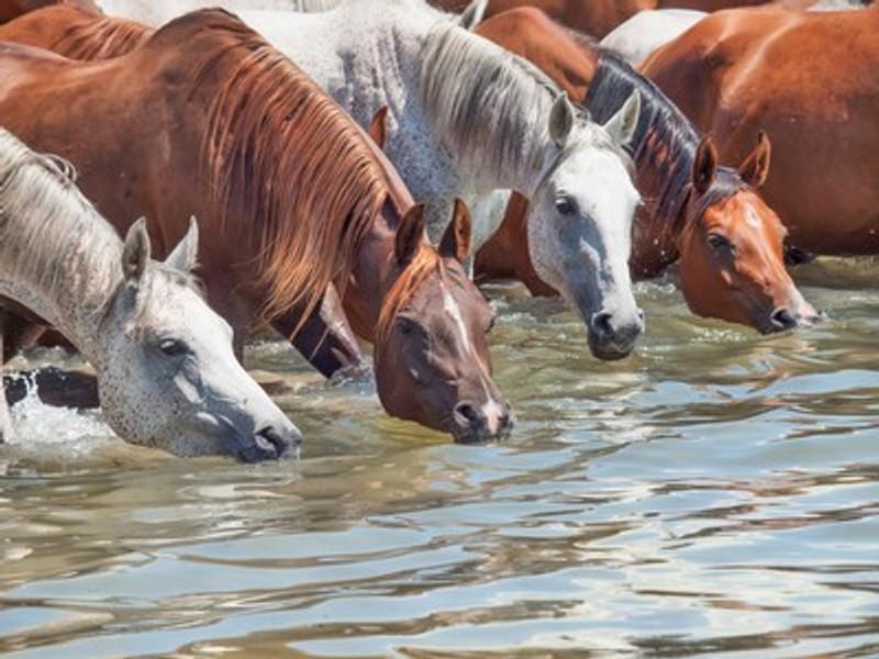 Healthy Water  Equals Healthy Horse.