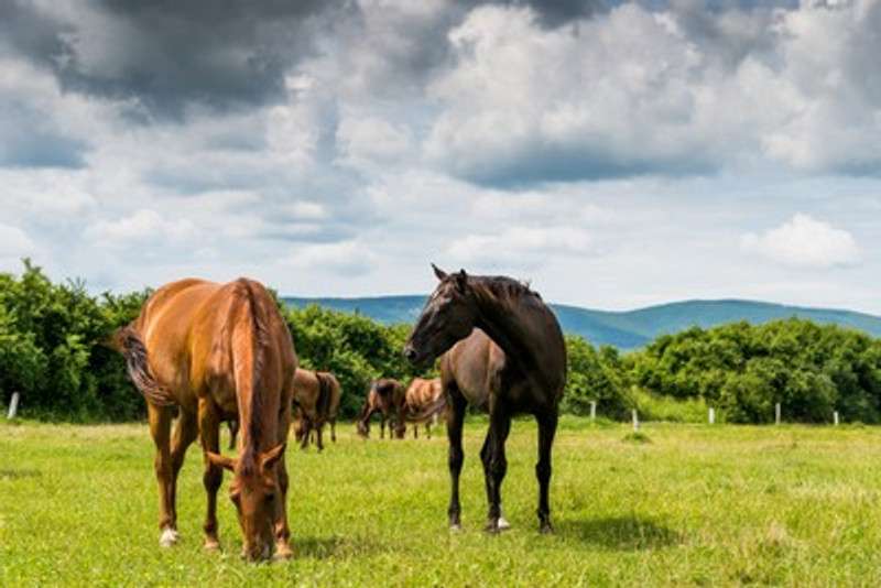 Keeping your Horses Happy and Injury Free in the Paddock
