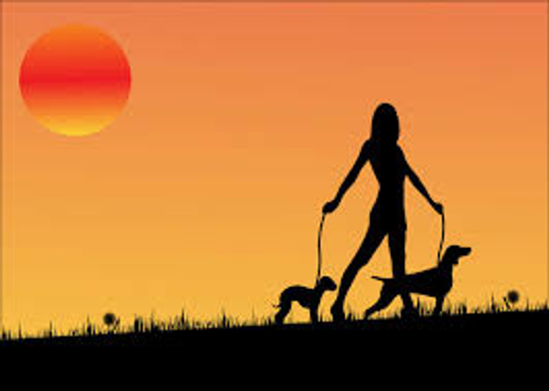 Walking with your Dog is totally Underrated!!!!