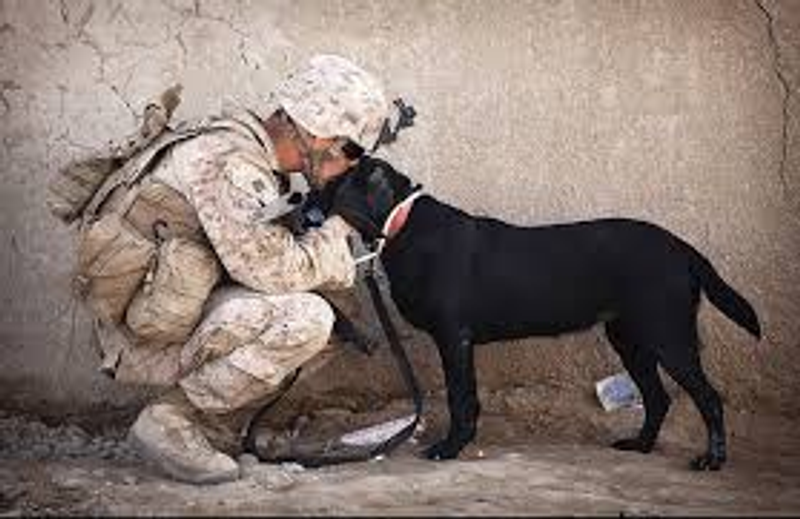 War Animal Day - Remembering the service Animals, and Pets have given us!