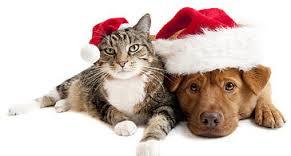 dog-and-cat-xmas.jpg