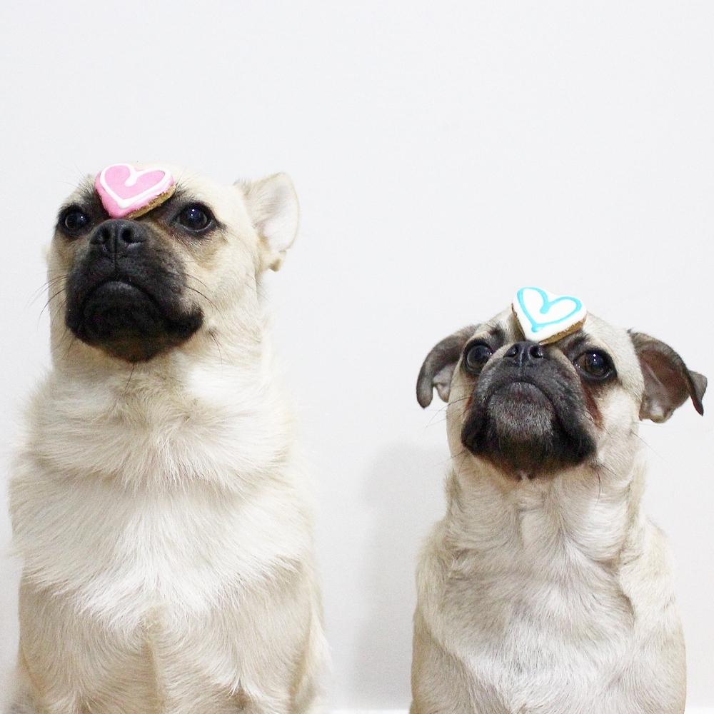 jp-dogs-hearts.jpg