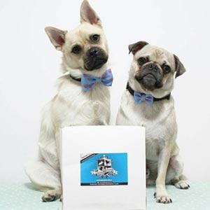 jp-dogs.jpg