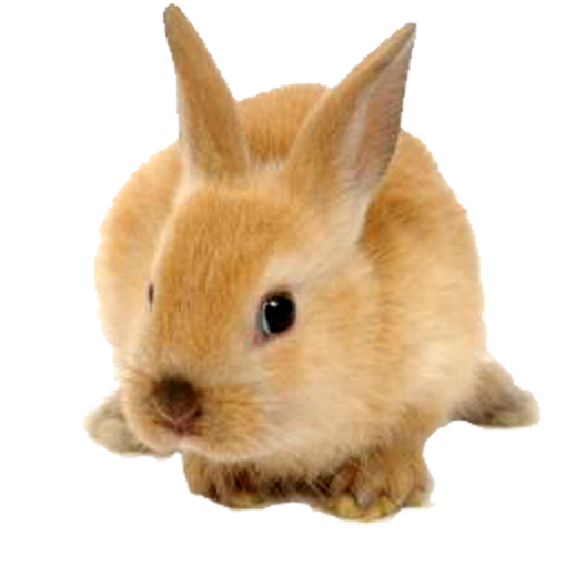 jp-rabbit.png