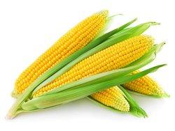 rsz-11organic-corn.jpg