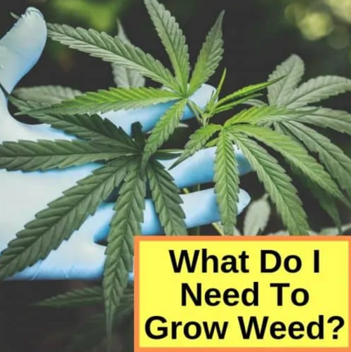 7 Tips for using Horticulture Products to grow Marijuana Indoor