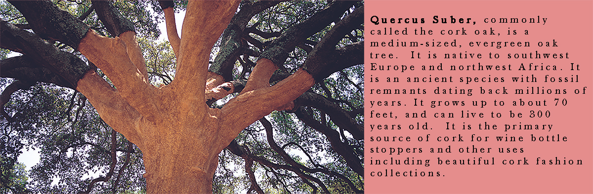 quercus-suber-4.jpg