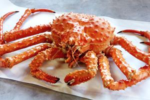 Golden king crab