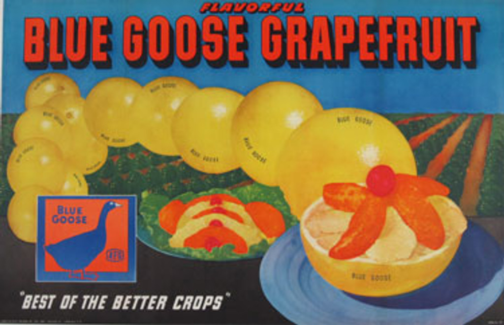 Blue Goose Grapefruit original advertising vintage poster. This original antique poster features a grapefruits with orchard in the background.