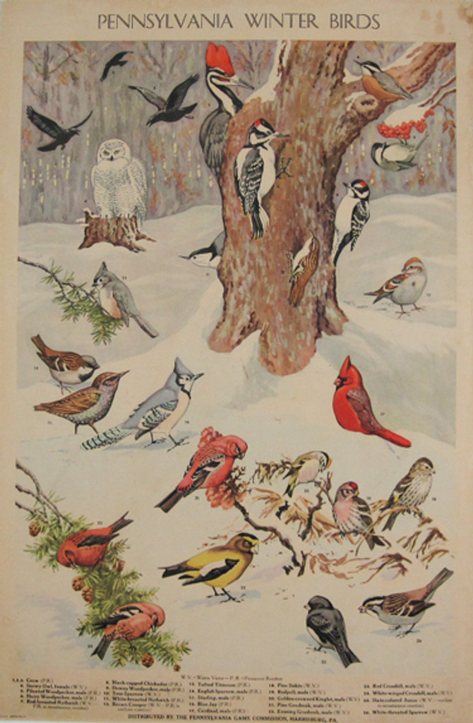 Pennsylvania Winter Birds by Jacob Bates Abbott original vintage poster from 1946 USA