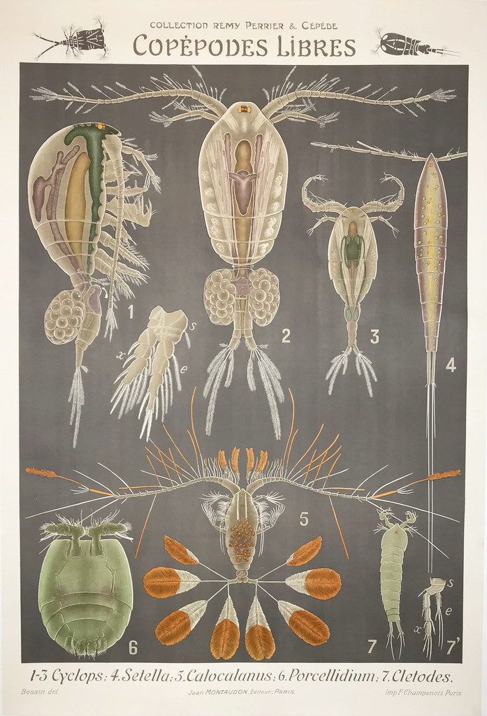 French Copepodes Libres