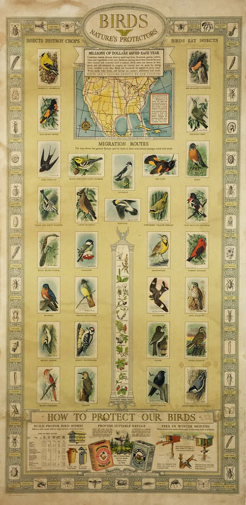 Birds Natures Protectors original vintage poster from 1938 by Chuech and Dwight Co.