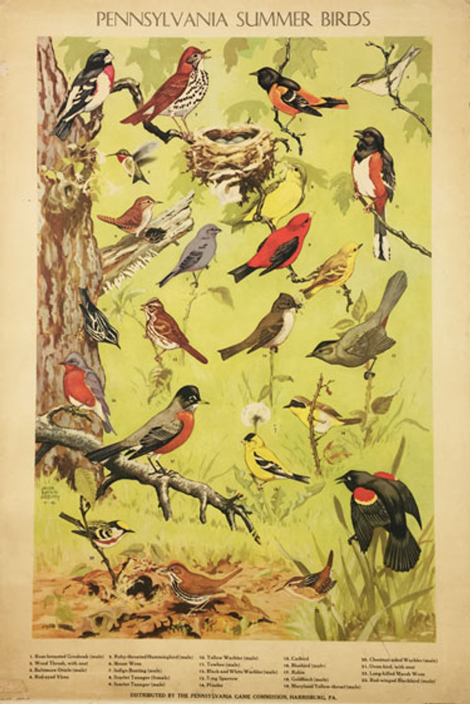 Pennsylvania Summer Birds original lithographic advertisement vintage poster from 1946 by Abbott.