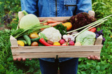 Your guide to your best fall vegetable garden